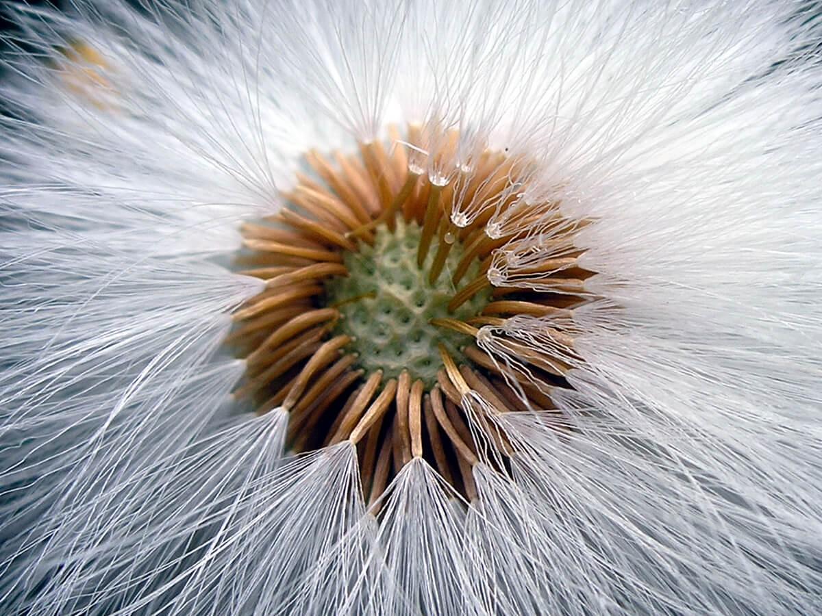Biljka - 3