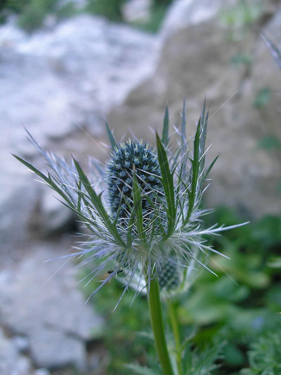 Biljka - 5