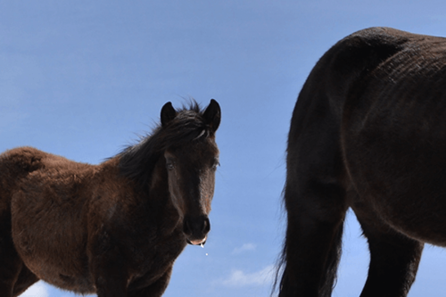 Galerija – Konji i Životinje