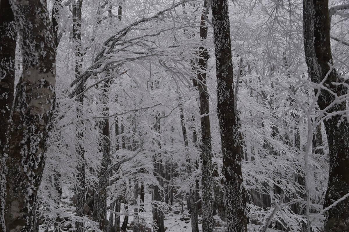 Galerija – Zima